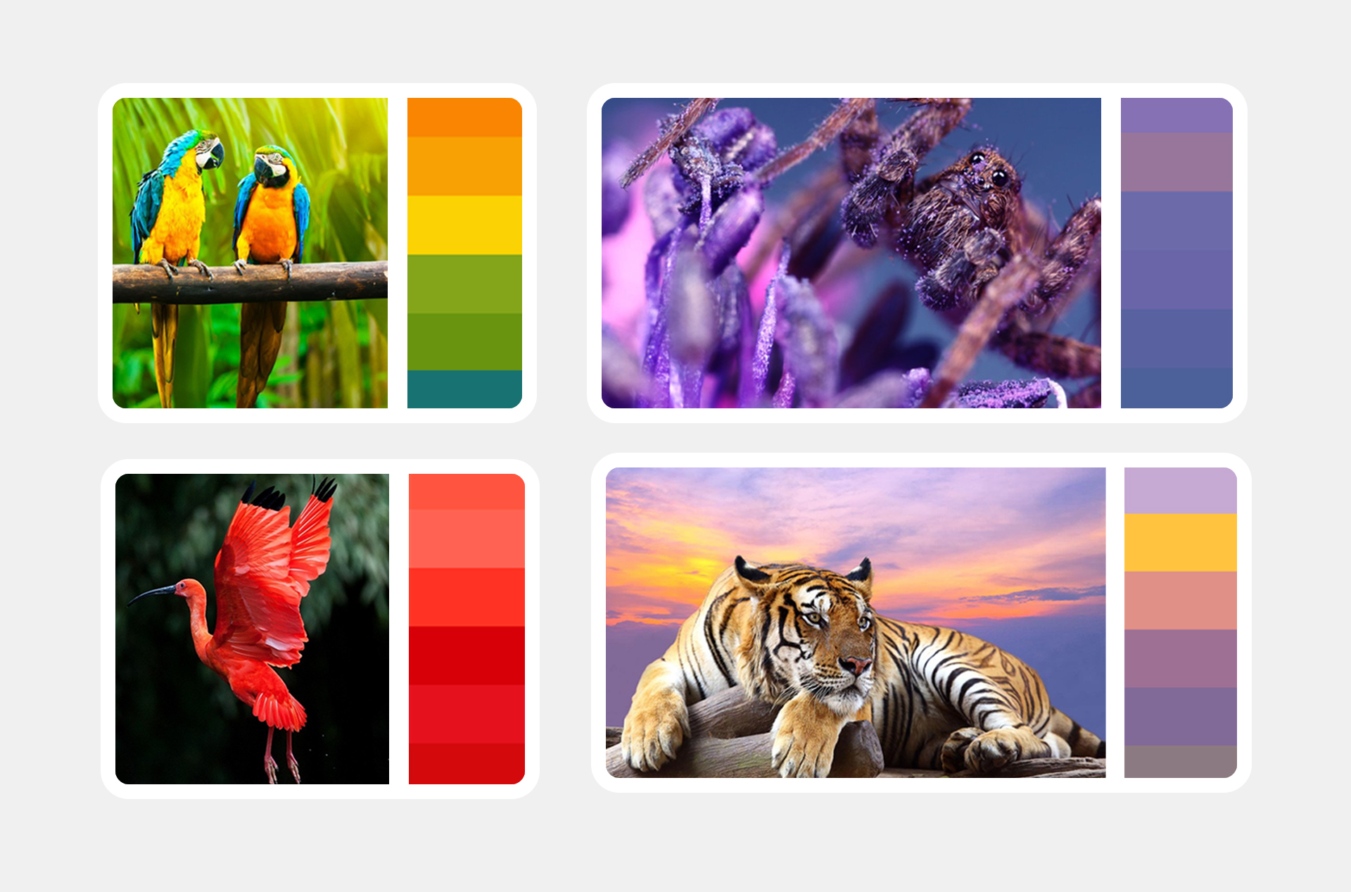 brand color schemes- brand color palette-bratus vietnam- vinpeal safari